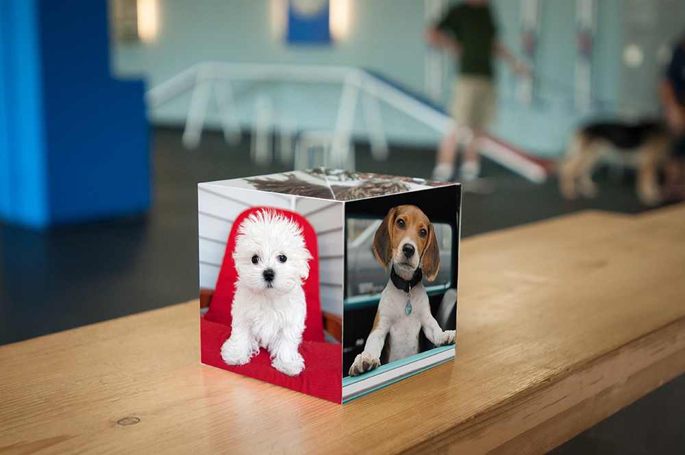 "Karen Hoglund Highlights Award-Winning Dog Photography Using 4.25"" Pop Up Cube"